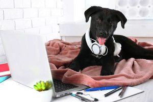 chien reseauter networking